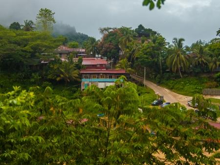 Premiers pas dans la jungle tropicale