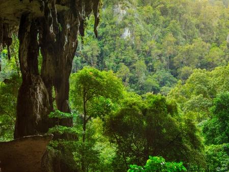 Au cœur de la forêt primaire