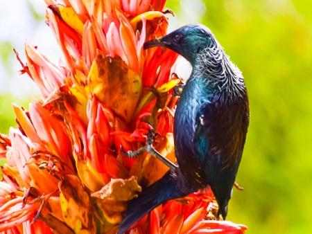 Au cœur de la nature Kiwi !