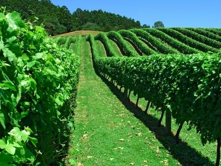 Les vignobles d'Hawkes Bay