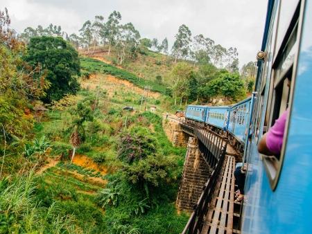 Train mythique au cœur des plantations de thé