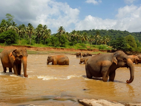 Safari et éléphants sauvages à Minneriya