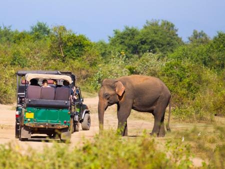 Safari en 4X4 au Parc National de Yala