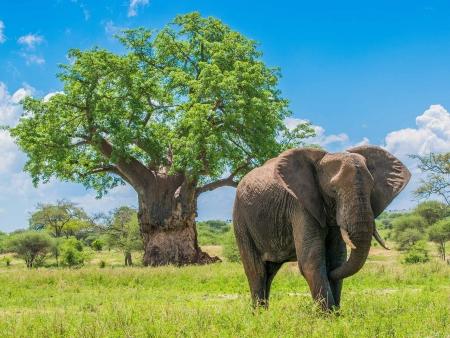 Safari en Terre Masai