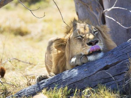 Survol des paysages du Sud Tanzanien et premier safari