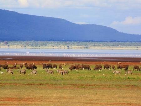 Plantation de caféiers et contreforts du Ngorongoro
