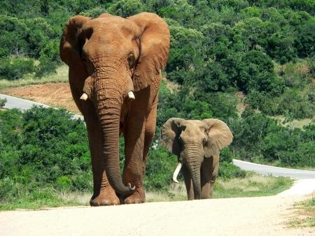 Le sanctuaire des éléphants