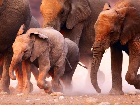 Votre premier safari au cœur de la nature