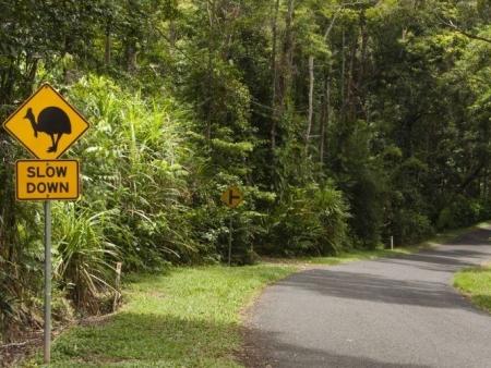 Journée dans le parc national du Wooroonooran