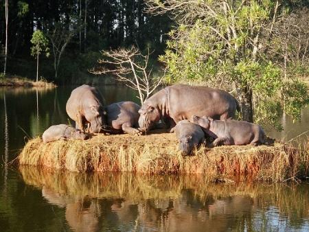 Au Swaziland !