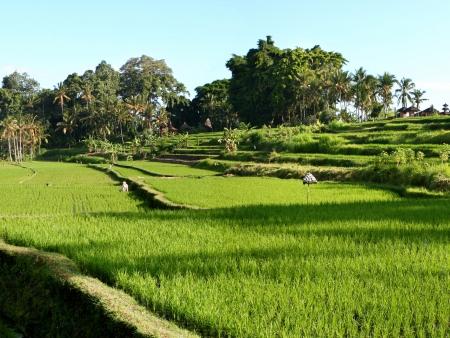 Traversée de Bali