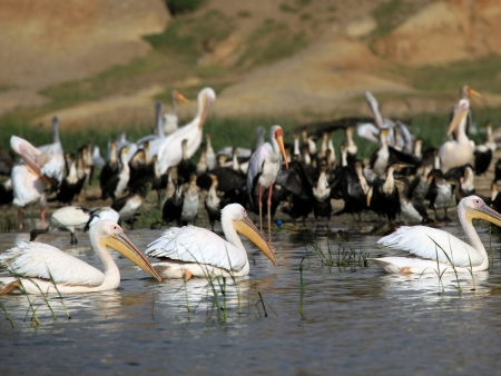 Magnifiques animaux du parc Lake Mburo