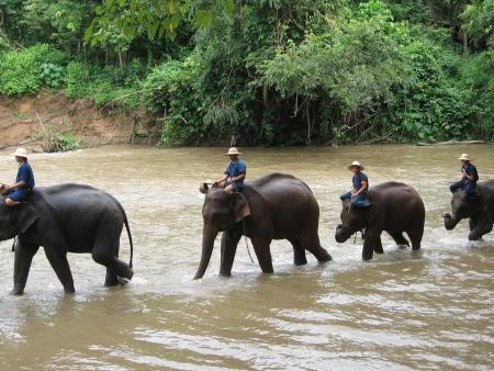 Eléphants et village Karen