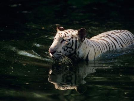 Arrivée au parc national Bandhavgarh