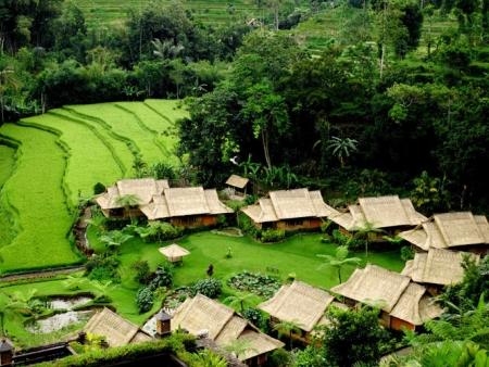 Visite de la région des lacs, trek à Munduk dans les rizières et les culture