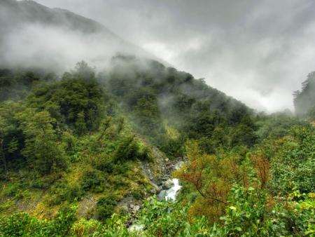 In Kinabalu Park