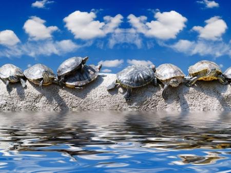Les tortues de Turtles Islands
