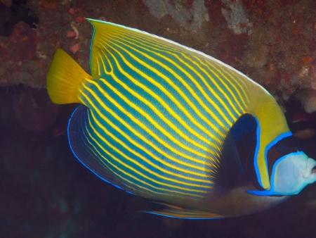 Jungle luxuriante et poissons multicolores