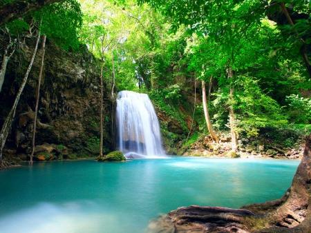 Randonnée en forêt tropicale