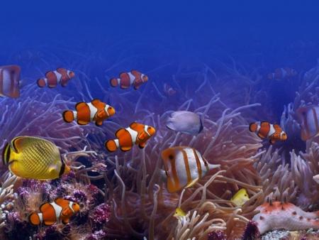 A l'aquarium de Bangkok