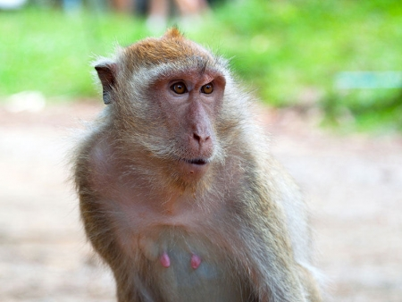 Visite de Lopburi et Phitsanulok