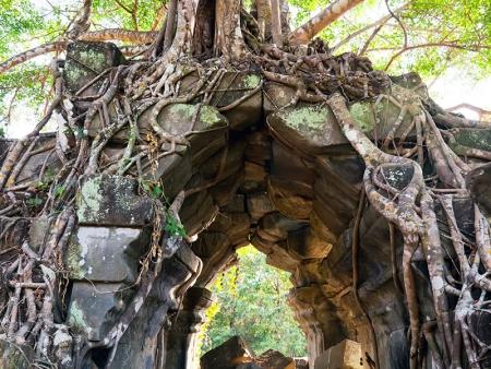 Entre jungle et temple isolé