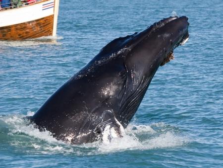 Baleine à tribord !