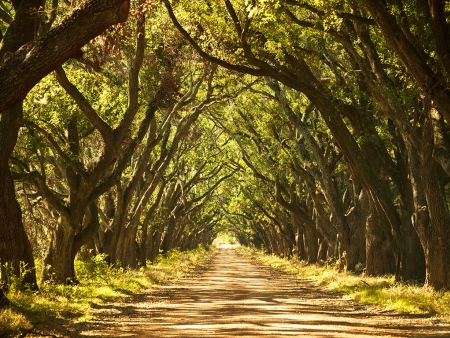 Visite des plantations (195km)