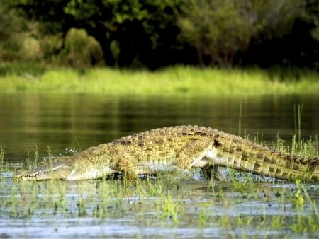 Geysers et sources d'eau chaude au Lac Bogoria