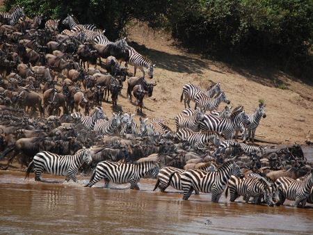 Poursuite de votre découverte du Masai Mara