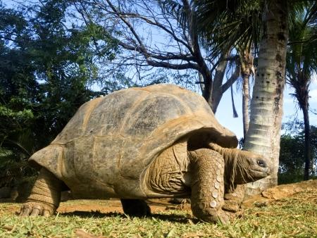 Oiseaux rares et tortues terrestres géantes