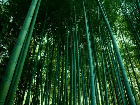 Dernière journée à Kyoto et Départ pour les Bahamas