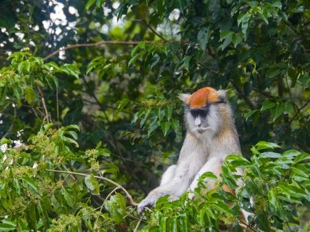 Le Parc de Bwindi et ses gorilles !