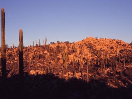 La réserve de biosphère El Pinacate et le Grand désert d'Altar au patrimoine de l'Unesco