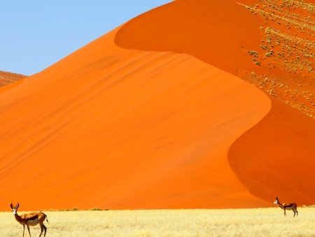 Spectaculaires dunes rougeoyantes de  Sossusvlei (120km)