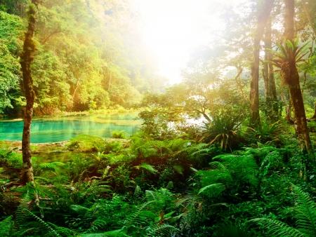 Forêt tropicale sèche du Parc National Rincon de la Vieja