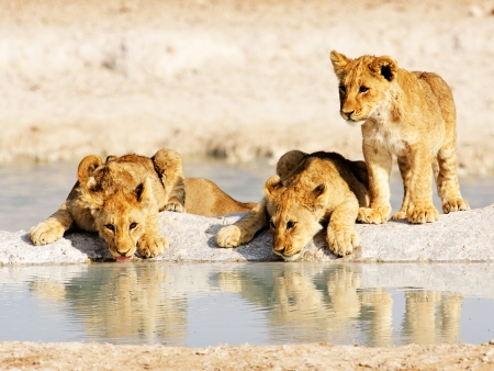 Journées entières de safari