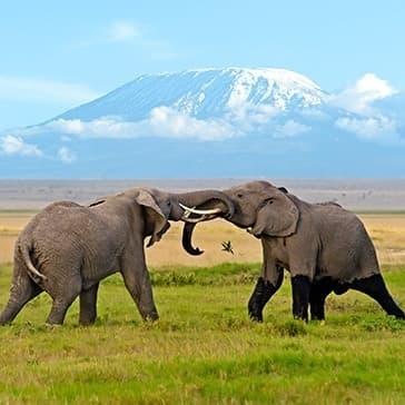 Voyage sur mesure Afrique