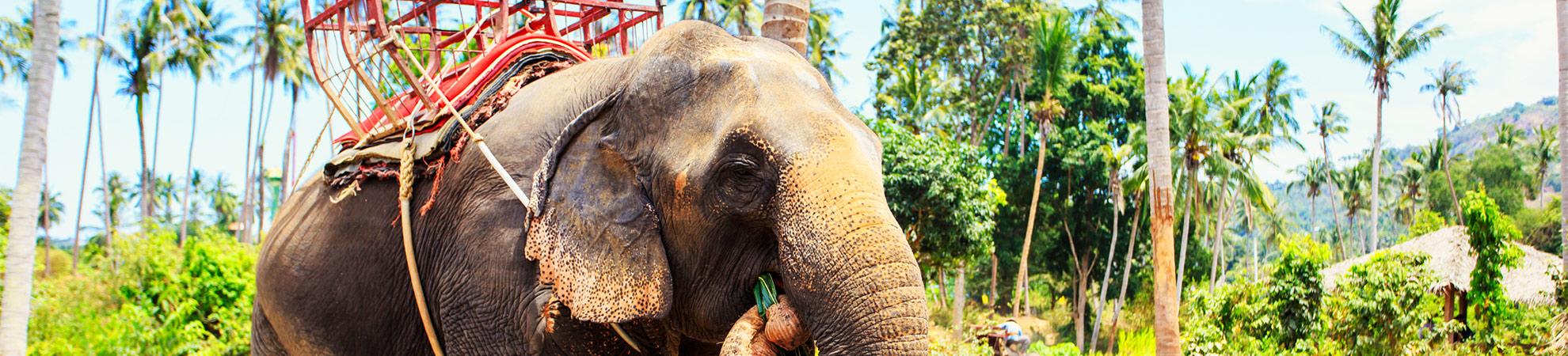 Balade à dos d'éléphant au Cambodge